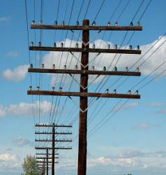 telephone-lines